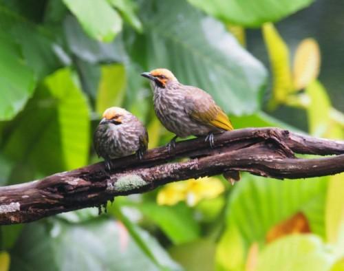Aksesories, Pakan, Obat dan Vitamin Burung KASUS PENYAKIT UMUM SAAT INI DAN CARA PENANGANANNYA