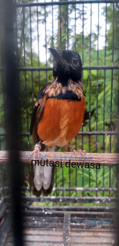 Burung Lainnya